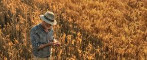 Produkcja nasion - Co warto wiedzieć o producencie nasion